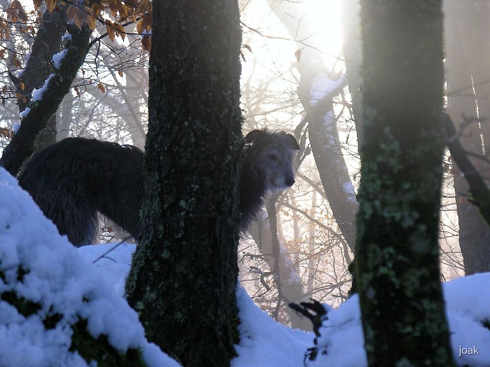 squirrel hunt by joak