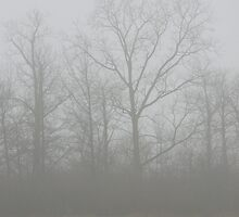 Trees in Fog by Veronica Schultz