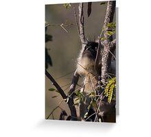 Langur Monkey Gazes Greeting Card