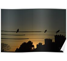 Birds on the wire Poster