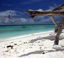 Dead Wood Beach by John Donatiu