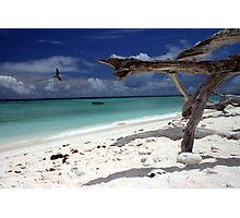 Dead Wood Beach Photographic Print
