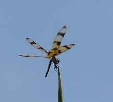 wings by lauriedal