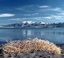 Pyramid Lake by Harry Snowden