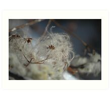 Nature's Lace Art Print