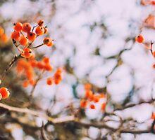 Wild Berries by pritamcreations