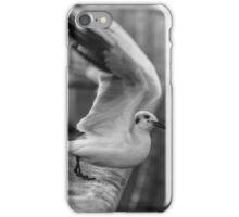 Seagull iPhone Case/Skin
