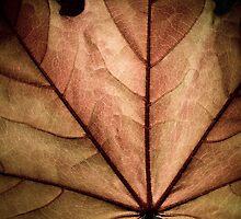Silver Maple Leaf by Albert Dickson