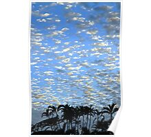 Subtropical winter sky Poster