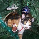 christmas kitten by sharon wingard