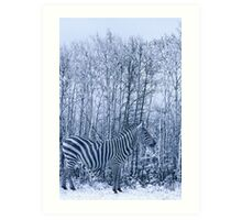 Zebra's winter camouflage Art Print