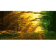 Picture 2015063 Justin Beck sunset in the Forest Photographic Print