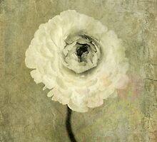 Ranunculus by Antaratma Images