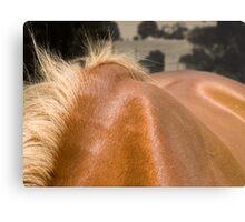 Equine #5 Metal Print