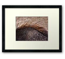 Equine #6 Framed Print