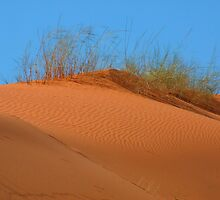 kalahari Dune by Mark Lindsay