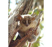 Mouse Lemur Photographic Print