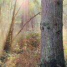 Dutch forest by jimmy hoffman