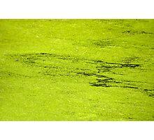 How Much Scum Could a Pond Scum Scum, If a Pond Scum Could Scum Scum? Solved! Photographic Print