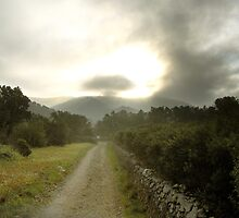 LANDSCAPE by PilarColl