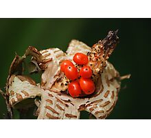 Special flower ... Photographic Print