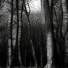 Moonlit by Katseyes