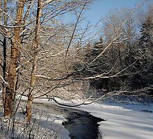 Snow Day by Kathleen   Sartoris