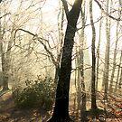 Sunny Morning Walk... by stellaozza