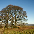 Hill top trees in Derbyshire by peteton