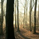 Woodland Winter Walk by stellaozza