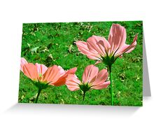 Delicate Flowers  Greeting Card