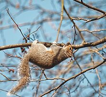 Hang In There Squirrel by JoshuaStomberg