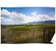 Vineyard - Watagan, NSW Poster