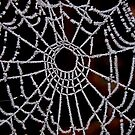 JACK FROST CAUGHT  IN A SPIDERS WEB  by Johan  Nijenhuis