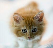 Valletta the kitty 4 by narabia