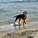 Playing on The Beach by Teresa Zieba