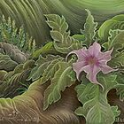 Jimson Weed in Bloom by judecowell