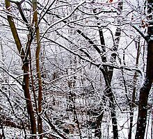New England Winter Woods by Gillwho