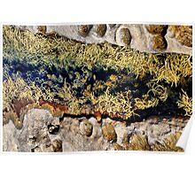 Rocks & Seaweeds II Poster