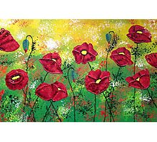 Red Poppies Aglow Photographic Print