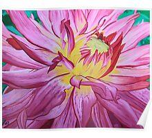 Dazzling Pink Dahlia Poster