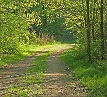 Tree lined road by Karl R. Martin