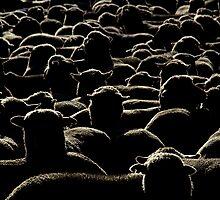 Like a lot of lost sheep by Michael Morffew
