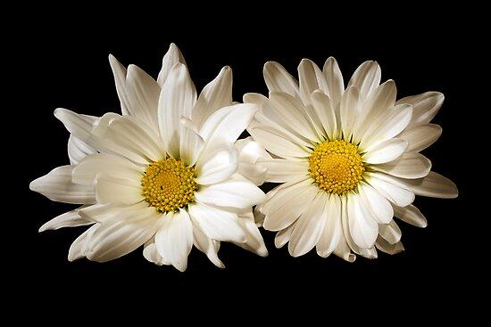 Double Delights by Sheryl Kasper