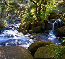 Murrindindi Cascades, Buxton by Vicki Moritz