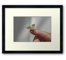 Unidentified moth, on board OMS Terra Nova, at Exmouth WA Framed Print