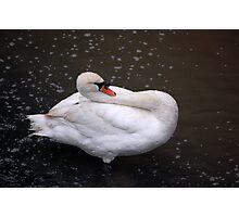 limbo swan Photographic Print