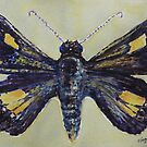 Altona Skipper Butterfly 2 by Virginia  Coghill