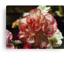 Red and White Carnation Canvas Print