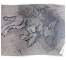 MY DOG LARY(C1980) Poster